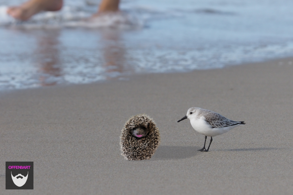 Bildnachweis: Chiusure by Claudio Frediani CC-BY-SA 2.0 und Beware the Foot - A Sanderling's POV by Ingrid Taylar CC-BY 2.0 montiert und bearbeitet von Simon Mallow.