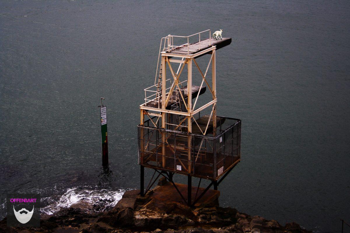 Bildnachweis: Diving Platform by Alexander Baxevanis CC-BY 2.0 und Cornered by LimeSpiked CC-BY 2.0, montiert und bearbeitet von Simon Mallow.